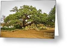 Founders Oak Greeting Card