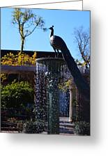Fountain And Peacock Greeting Card