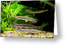 Four Aquarium Fishes In Zoo Greeting Card