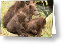 Four Bear Cubs Looking In Same Direction Greeting Card
