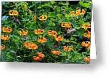 Four Butterflies On Turks Cap Lilies Greeting Card
