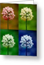 Four Colorful Onion Flower Power Greeting Card