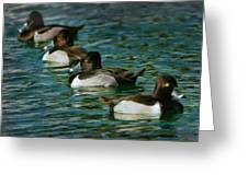 Four Ducks In A Row Greeting Card