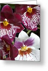 Four Exotic Orchid Blossoms Greeting Card