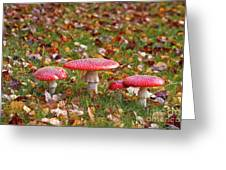 Four Fly Agarics Among Dead Leaves Greeting Card