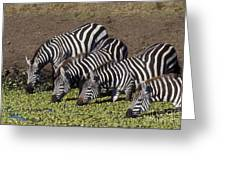 Four For Lunch - Zebras Greeting Card