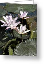 Four Lilies In The Sunlight Greeting Card
