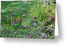Four Monarch Butterflies Greeting Card
