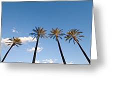 Four Palm Trees Greeting Card