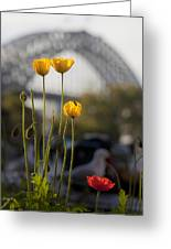 Four Poppies With Harbour Bridge Backdrop Greeting Card