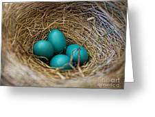 Four Robin Eggs In Nest Greeting Card