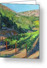 Four Rows Napa Valley Greeting Card by Anna Rose Bain