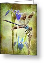 Four Spotted Pennant And Louisiana Irises Greeting Card by Bonnie Barry