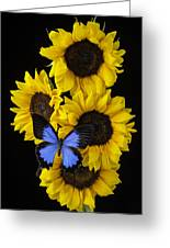 Four Sunflowers And Blue Butterfly Greeting Card