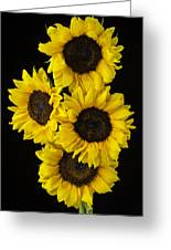 Four Sunny Sunflowers Greeting Card