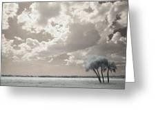 Four Trees Greeting Card