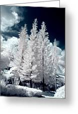 Four Tropical Pines Infrared Greeting Card