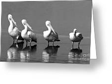 Four White Pelicans In A Funny Pose Greeting Card