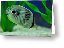 Foureye Butterfly Fish Greeting Card