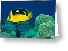 Fourspot Butterflyfish Greeting Card