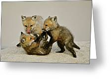 Fox Cubs At Play II Greeting Card