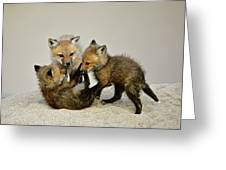 Fox Cubs At Play Greeting Card