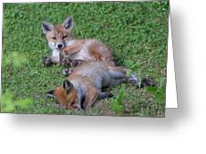 Fox Cubs Chilling Out Greeting Card