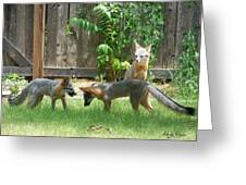 Fox Family Greeting Card by Deleas Kilgore