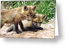 Fox Feather Play Greeting Card