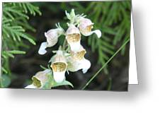 Fox Glove Greeting Card