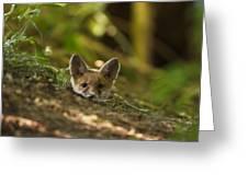 Fox Hole Greeting Card