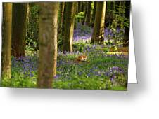 Fox In Bluebells Greeting Card
