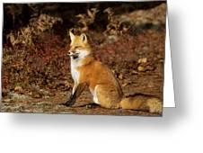 Fox In The Fall Greeting Card