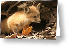 Fox Kit At Entrance To Den Greeting Card