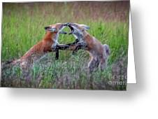 Fox Kitts Playing Greeting Card
