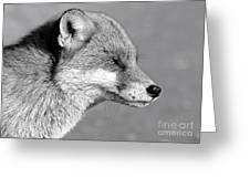 Fox - Mono Greeting Card