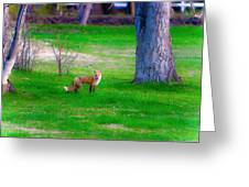 Fox Of Boulder County Greeting Card