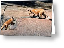 Red Fox Playtime Greeting Card