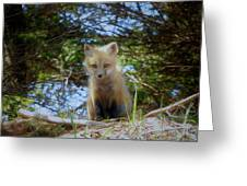 Fox Pup112 Greeting Card