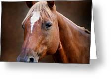 Fox - Quarter Horse Greeting Card