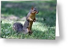 Fox Squirrel Greeting Card
