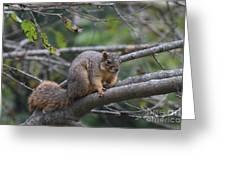 Fox Squirrel On A Branch  Greeting Card