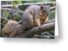 Fox Squirrel On A Branch - Southern Indiana Greeting Card