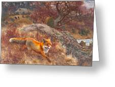 Fox With Hounds Greeting Card