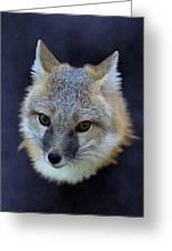 Foxburst Greeting Card