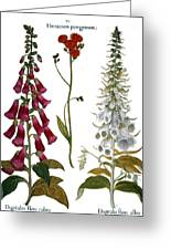 Foxglove And Hawkweed Greeting Card