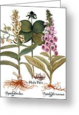 Foxglove And Herb Paris Greeting Card