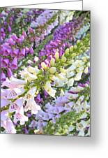 Foxglove Card Greeting Card