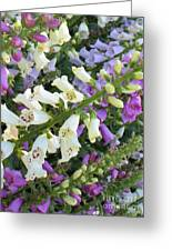 Foxglove Fancy Greeting Card