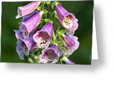 Foxglove For Artemis Greeting Card